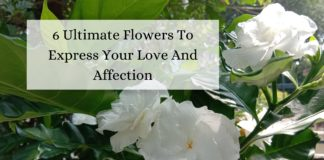 6 Ultimate Flowers To Express Your Love And Affection